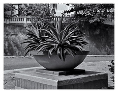 Pentax Auto 110 (1978) (Black and White Fine Art) Tags: pentaxauto1101978 pentax11024mmf28 pentaxmini pentax aristaedu100 110format formato110 smallformat formatopequeño bn bw sanjuan oldsanjuan viejosanjuan puertorico streetphotography fotografiacallejera