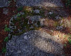 gravestone (amazingstoker) Tags: stone amazingstoke basingrad 1700 basingstoke hampshire skull holy chapel hill ghost grave halloween basingspook decay dappled light