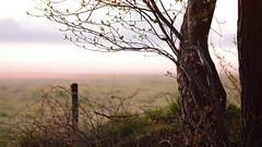 DSC_9664x_00001 (frans.oost) Tags: dawn mist tree field landscape abigfave