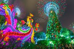 Mid-Autumn Festival GBTB (spintheday) Tags: midautumnfestival lanternfestival singapore gardensbythebay night festival lights supertrees