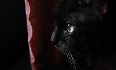 My oldest Cat... (Beckerhenning) Tags: old cat pet nikon d750 24120mm