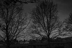 I see trees of... (matthias scholl - photography and fine art prints) Tags: abendhimmel aeste baum blackandwhite blackwhite haardt neustadt neustadtanderweinstrasse schwarzweiss tree outdoor draussen