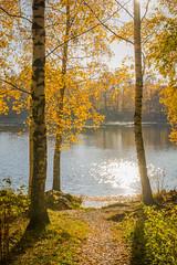 Iidesjärven rannalla (Markus Heinonen Photography) Tags: iidesjärvi järvi lake maisema landscape waterscape metsä forest tampere suomi finland europe luonto nature syksy höst autumn