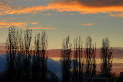 Evening (tatranka7) Tags: landscape evening sunset trees colors sky tree