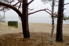 Strandsicht (claudipr0) Tags: lettland baltikum latvia strand ostsee sea beach balticsea kiefern birken birch pinetrees umkleide saulkrasti