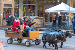 McDonald's Thanksgiving Parade 2017 (spierson82) Tags: wagon mcdonald'sthanksgivingparade thanksgivingparade dog thanksgiving chicago parade horse statestreet animal illinois unitedstates us