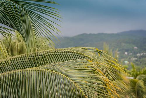 Jamaica-126.jpg
