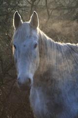 Horse (oldgoat50) Tags: horse newcastleton scottishborders
