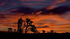 Joshua Tree Sunrise (Lone Rock) Tags: sunset joshuatree arizona mohavecounty gordoncottrell desert