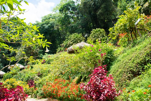 Chiang Maï-Doi Pui garden