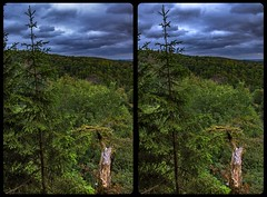 Helenenruh 3-D / CrossView / Stereoscopy (Stereotron) Tags: sachsenanhalt saxonyanhalt ostfalen harz mountains gebirge ostfalia hardt hart hercynia harzgau helenenruh elend schierke deutschland germany europe wald natur forest woods outback backcountry wilderness cross eye view xview crosseye pair free sidebyside sbs kreuzblick bildpaar 3d photo image stereo spatial stereophoto stereophotography stereoscopic stereoscopy stereotron threedimensional stereoview stereophotomaker photography picture raumbild twin canon eos 550d remote control synchron kitlens 1855mm 100v10f tonemapping hdr hdri raw