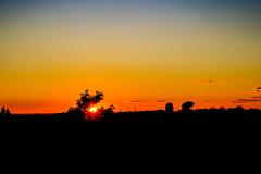 Atardecer de ahora mismo (ameliapardo) Tags: atardeceres cielo sol nubes arboles contraluz rojo amarillo azul fujixt2 fujinon1855