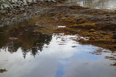 DSC01629 Eilean Donan, Scotland (Fernando Sa Rapita) Tags: scotland escocia eileandonan sony sonyrx100 sonydscrx100 water agua lake lago seagull gaviota ave bird reflejo reflection