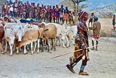 Fiesta del Salto del Toro (KRAMEN) Tags: salto toro etiopía tribu vacas people gentío gente áfrica