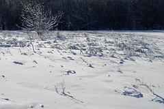 Talv (Jaan Keinaste) Tags: pentax k3 pentaxk3 eesti estonia loodus nature talv winter lumi snow