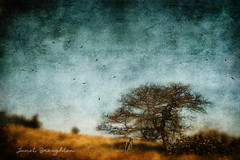 The Tree (Janet_Broughton) Tags: edge35 lensbaby rural countryside landscape tree textured painterly