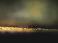 It is a small world (Vivi Black) Tags: life outside blure bokeh details jungle animal light ant macro