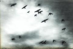 * (PattyK.) Tags: snapseed nikond3100 ioannina giannena giannina epirus ipiros balkans hellas ellada greece grecia griechenland whereilive 2018 autumn november νοέμβριοσ ιωάννινα γιάννενα ελλάδα ήπειροσ βαλκάνια ηπόλημου πουλιά birds sky monochrome