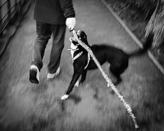 Dog and Stick (raymorgan4) Tags: dog stick walk exercise roathparklake cardiff motion blur blurry low shutter speed