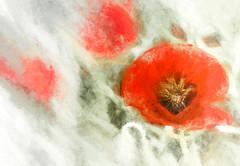 1334 Poppy Time (foxxyg2) Tags: red flora flowers poppies poppy art abstract texture topaz topazsoftware topazsimplify topazstudio naxos cyclades greece