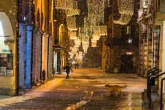Merry Christmas and best wishes to all my Flickr friends (lucafabbricesena) Tags: cesena emiliaromagna italy fall down light dog watching snow street christmasilluminations corsomazzini snowflakes winter night people column arcade nikon d800 cinemaastra