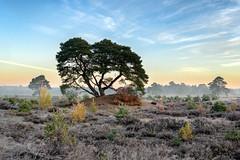 Een koude herfst ochtend (Pieter ( PPoot )) Tags: kou mist zonsopkomst herfst