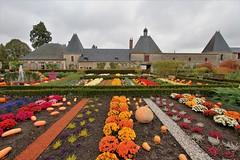 Le jardin potager - Cheverny (hervétherry) Tags: france centrevaldeloire loiretcher cheverny canon eos 7d efs 1022 jardin potager chateau moulinsart legume fleur couleur