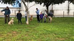 IMG_8526 (Doggy Puppins) Tags: educación canina adiestramiento canino perro dog
