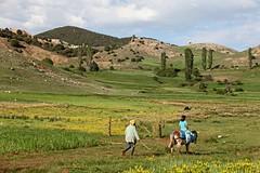 TRANSPORT AU NATUREL DANS LA RÉGION D'AZROU - MAROC (mimi.deparis21) Tags: morocco maroc azrou nature vallée montagne paysan cavalière âne fleurs vert jaune bleu paysage