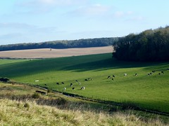 Jumping Downs , Barham (Alex-397) Tags: kent countryside scenery landscape uk england britain
