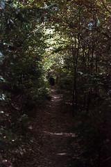 tunnel (mischlicht.net) Tags: agfaphotovista400 felsenweg leicam6classic zeisscbiogon35mm28 mischlicht mischlichtnet filmphotography analogue analogefotografie landschaft landscape tree trees baum bäume herbst autumn fall fallfoilage