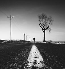 Life Won't Wait For You (L. Paul) Tags: fuji fujifilm fujifilmxe3 fujixe3 xe3 fujinon27mmf28 road oldroad highway oldhighway middleofnowhere tree oldtree blackandwhite gregorylandingmissouri