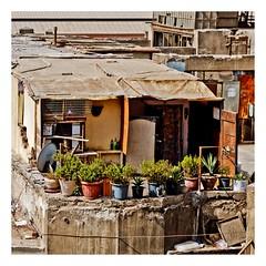 la main verte (Marie Hacene) Tags: egypte lacaire pots fleurs plantes balcon murs immeubles
