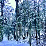 2018-12-13   -  York Reagional Forest, one of many  -   - thumbnail