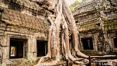 Ta Prohm - ប្រាសាទតាព្រហ្ (Lцdо\/іс) Tags: taprohm ប្រាសាទតាព្រហ្ khmer cambodge cambodia tomb raider kamboscha kambodscha asia asian temple tree historic movie lara croft angelina jolie voyage discover explore flickr magic lцdоіс buddhisme buddha hindou