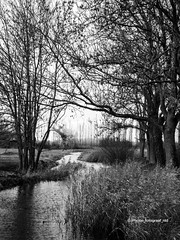 (iPhone Fotograaf) Tags: autumn clouds blackandwhite evening landscape nature tree dutch reed water iphone8plus