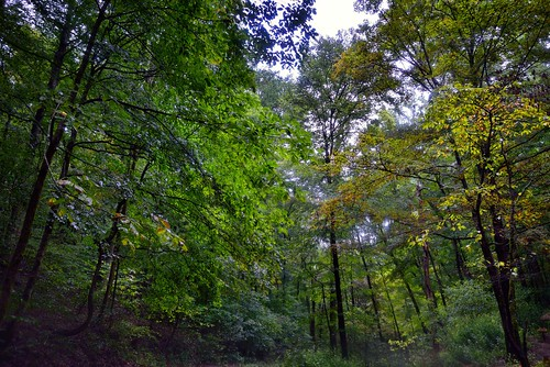 I Lifted My Eyes to Took in a Beauty of Woods and Forest (Mammoth Cave National Park)