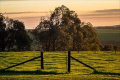 P2241841 Arabella Country House (Dave Curtis) Tags: victoria greatoceanwalk sunset arabellacountryhouse arabella farm 2014 australia em5 omd olympus places september wa westernaustralia