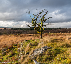 Lone tree. (Mark McKie) Tags: galloway gallowayforestpark gallowayhills minnigaff newtonstewart nikon nikonphotography nikond7500 clouds cloudy grass rocks wigtownshire scotland scottishlowlands scottish scenery landscape lonetree cardorcan woodofcree