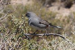 2018-102523 (bubbahop) Tags: 2018 antarcticatrip puertomadryn argentina punta loma natural reserve bird animal