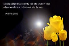 Sun in a yellow spot (daridawn) Tags: pablopicasso france peace politics quotation quotes art artist yellowvest tulip publicdomain sun