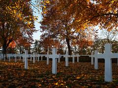 Cambridge American Cemetery (davepickettphotographer) Tags: uk cambridgeshire cambridgeamericancemetery madingley coton east eastern england american autumn landscape leaves fallen fall