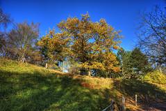 24-Britzer Garten_181116_N- 12 (sigkan) Tags: deutschland berlin britzergarten hdr nikond700 nikon2485mmf284