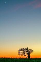 La Luna y el Almendro en flor (arapaci67) Tags: flor flordealmendro luna jaén campiña árbolsolitario lunacreciente invierno andalucía spain canon naturephotography canon70d canonistas