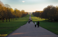 Long Walk (music_man800) Tags: long walk longwalk windsor castle royal queen drive uk surrey berkshire m4 united kingdom day trip roadtrip autumn fall november 2018 evening dusk late afternoon golden hour gold light lighting low shadow shadows grass pastel green colourful pretty vanishing point view scene scenery landscape people outdoors outside natural nature trees canon 700d adobe lightroom creative cloud edit photography arty artistic create horizon blue sky