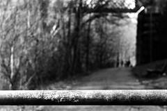 Portal (Leica M6) (stefankamert) Tags: leica m6 leicam6 summitar kodak trix film analog grain depthoffield dof bokeh noir noiretblanc blackandwhite blackwhite analogue portal people blur blurry trees stefankamert