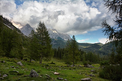 The forest trail (Niara Art) Tags: nature forest woods trees tree clouds sky summer season travel mountain mountains blue green brown natural pinetree grass field walking hiking austria österreich alm bachlalm stone rock branch naturephotography europe white beauty nikon marmot murmeltier