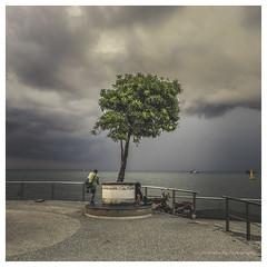 The last tree (christophe plc) Tags: tree sky sea christopheplc flickr canon 6dmark2 photo pic green ocean christophe plouhinec