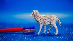 SHEEP - 6568 (ΨᗩSᗰIᘉᗴ HᗴᘉS +50 000 000 thx) Tags: smileonsaturday sheep mouton crayon pencil macrp toy blue red belgium europa aaa namuroise look photo friends be yasminehens interest eu fr party greatphotographers lanamuroise flickering fuji fujifilm fujifilmgfx50s