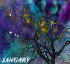 Just A Little Green:January 2019 AMG Bookmark (virtually_supine) Tags: january2019 amgbookmarkjanuary2019 baretreesandbranches willowtree birds collage text northernlights night moon wind justalittlegreen jonimitchell inspiredbysonglyrics vividcolour photomanipulation layers textures inversion photoshopelements13mac expressionist samsung sm a300fu